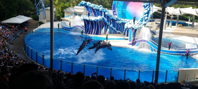 Dolphin show at SeaWorld